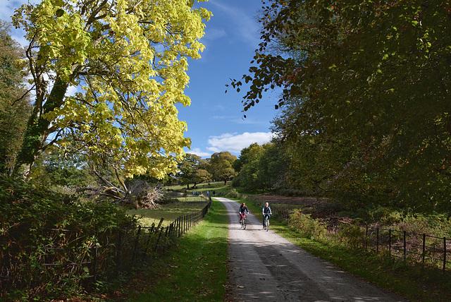 Autumn in Killarney