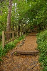 HFF Woodland Steps