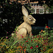 Wissembourger Hase