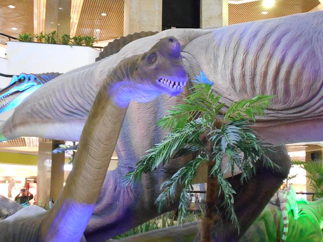 DSCN2806 - Brachiosaurus, Sauropodomorpha