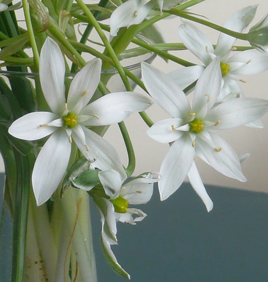 W like WHITE bouquet