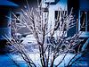 L'arbre de glace….