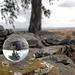 Spheric Eucalyptus, Penedos