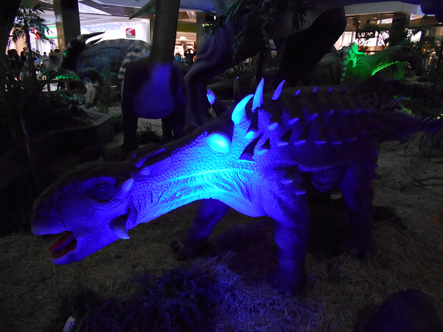 DSCN2808 - Ankylosaurus magnoventris, Ankylosauridae Ornithischia