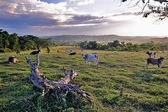 Landscape beside the highway to Santiago de Cuba