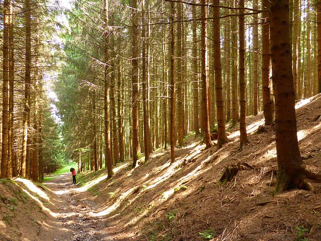Anna im Wald