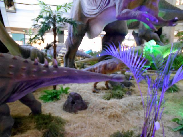 DSCN2814 - Ankylosaurus magnoventris, Ankylosauridae Ornithischia