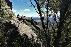 Mountain goat family, Sierra de La Cabrera below Canchos Gordo and Largo, and high above the Meseta.