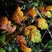 La bienvenue à l'automne et ses merveilleuses couleurs .