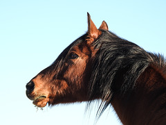 One of Barb's horses