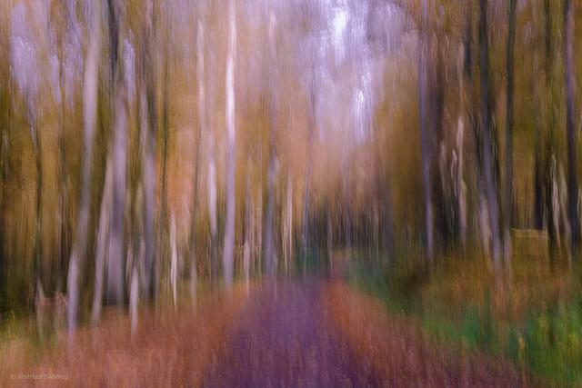 Parkinson Wald