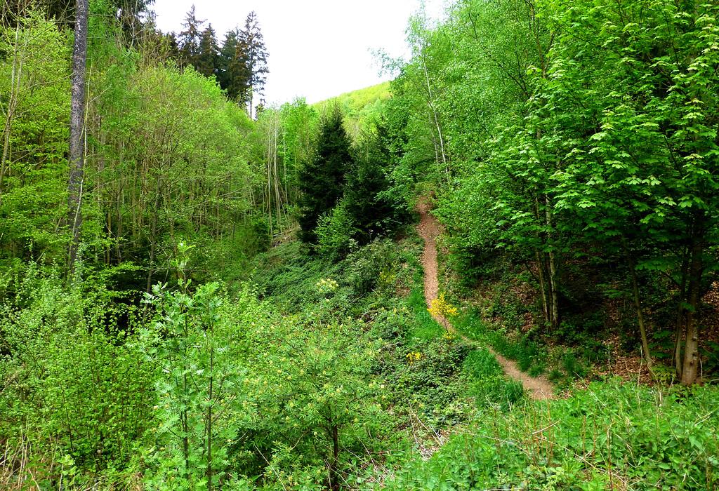 DE - Schleiden - Hiking between Olef and Gemünd
