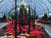 Christmas Conservatory