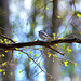 Tiny bird in the colorful world