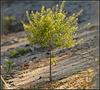 Ferro Concrete  Tree