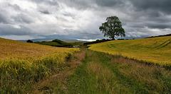 Amongst the fields of Barley