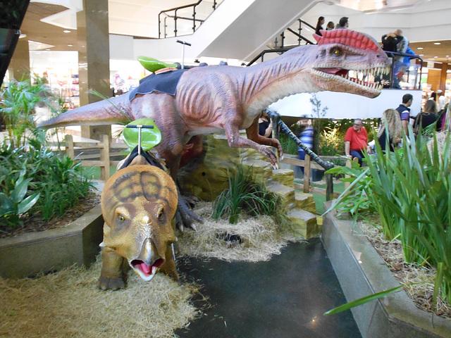 DSCN2819 - Protoceratops andrewsi, Protoceratopsidae Ornithischia