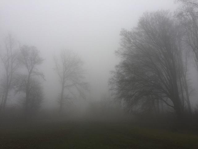 Carpathian forest mist