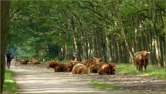 Siesta along the Trail...