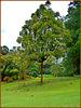 MAHE' : alcuni alberi del Botanical Park