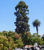 Santa Rosa (#0752)
