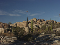 Catavina Desert Area, Baja