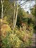 birch and bracken