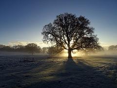Frosty morning at Attingham