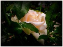 JOYEUX ANNIVERSAIR LUCETTE..................Bonne semaine mes ami(e)s