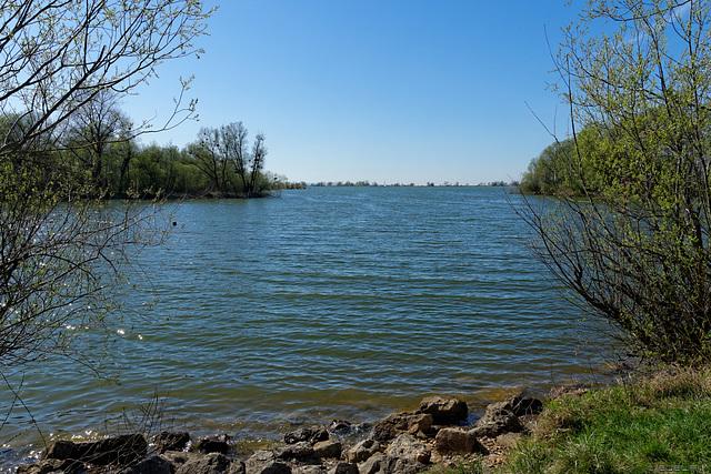 Naturschutzgebiet im Neuen Rhein Delta (© Buelipix)