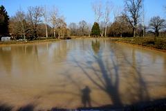 ombres sur l'Etang gelé
