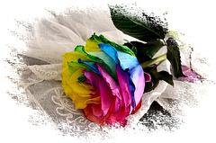 ~ Rainbow Rose ~