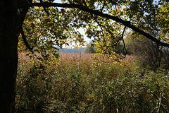 Herbst in Oberschwaben