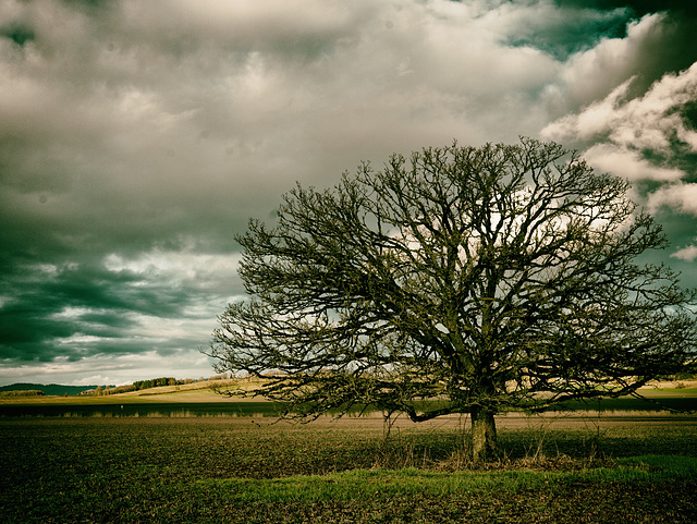 Yamhill County Tree