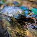 The bug on the fungus