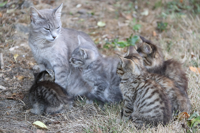 Une des mamans avec ses petits