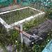 Cimetière des Caraïbes / Caribbean cemetery.