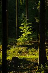 Wald Licht halt