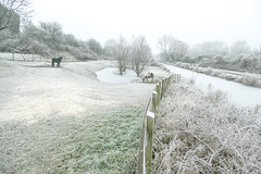 HFF to everyone.. from a frosty 'Chesterfield canal'