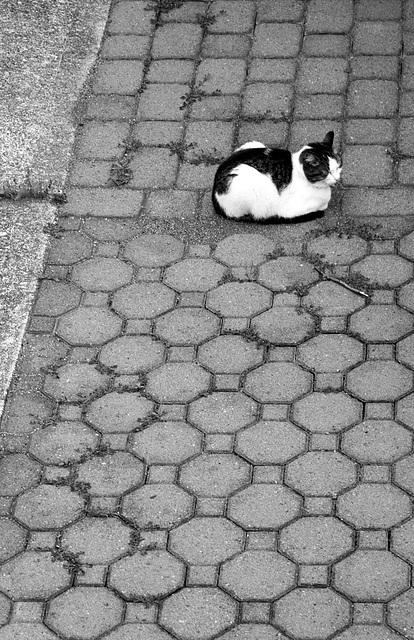 Cat on paving