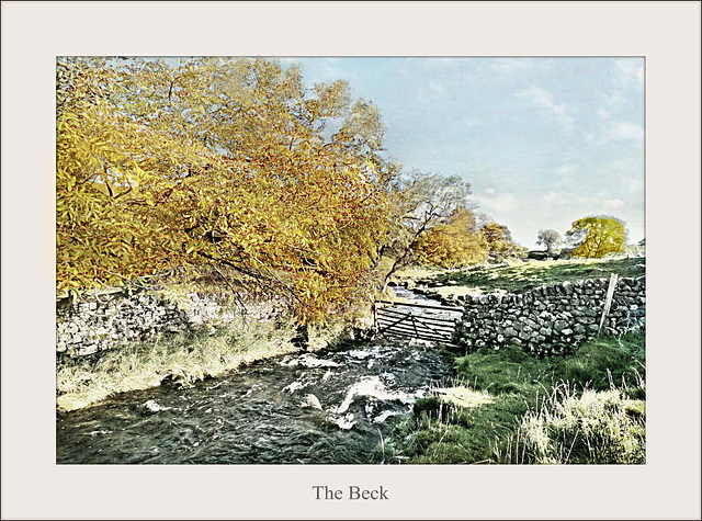 By Malham Beck in Autumn