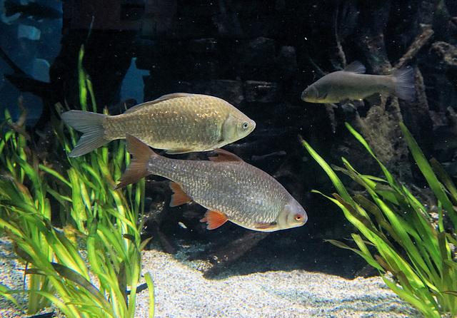 Im Aquarium…