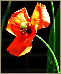 .. color or colour - it is still orange