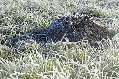 Bavarian Molehill