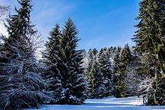 Winter bei Herrischried (© Buelipix)