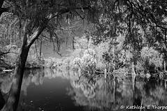 Trout Creek 002