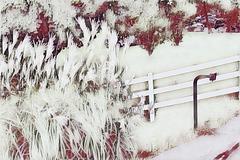 a white fence on white