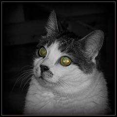 Lazers de chat !!
