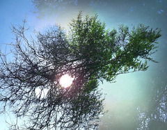 Flying shrub