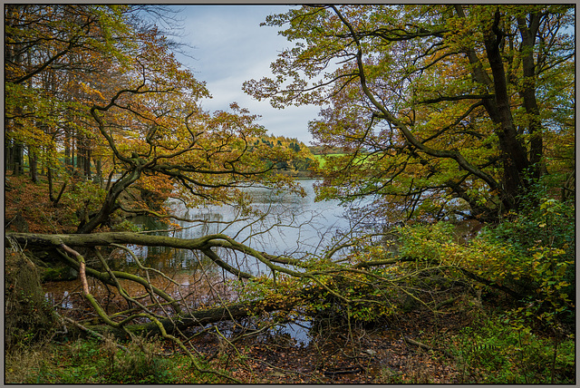 Autumn colours - Linacre dams - Chesterfield.